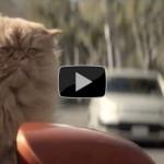 Katzen lieben den Toyota Corolla